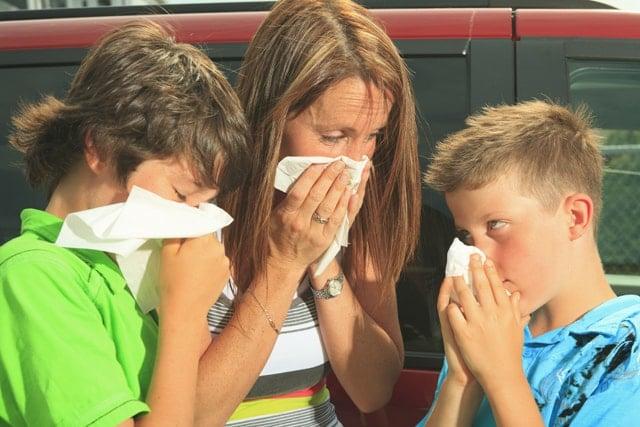 Causas de la alergia
